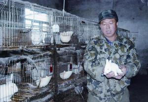 """黑龙江伊春:山村里的养兔""""大王"""""""