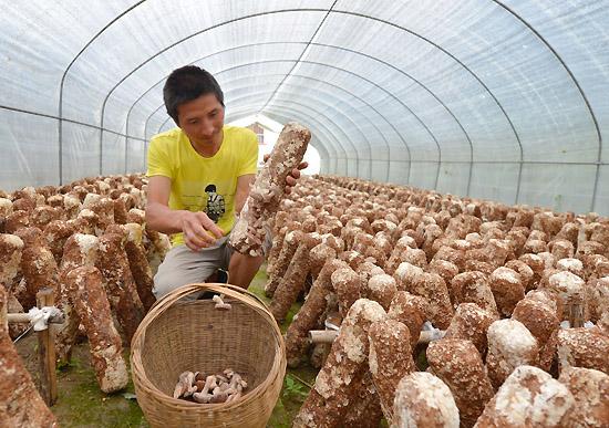 陕西留坝 林下经济 助农增收