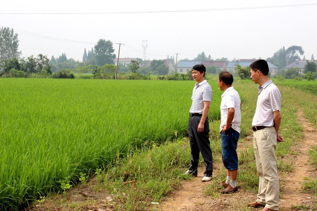 安徽广德县水稻机插秧稳步发展