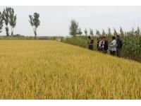 水稻种子包衣机